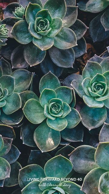Succulent smartphone wallpaper